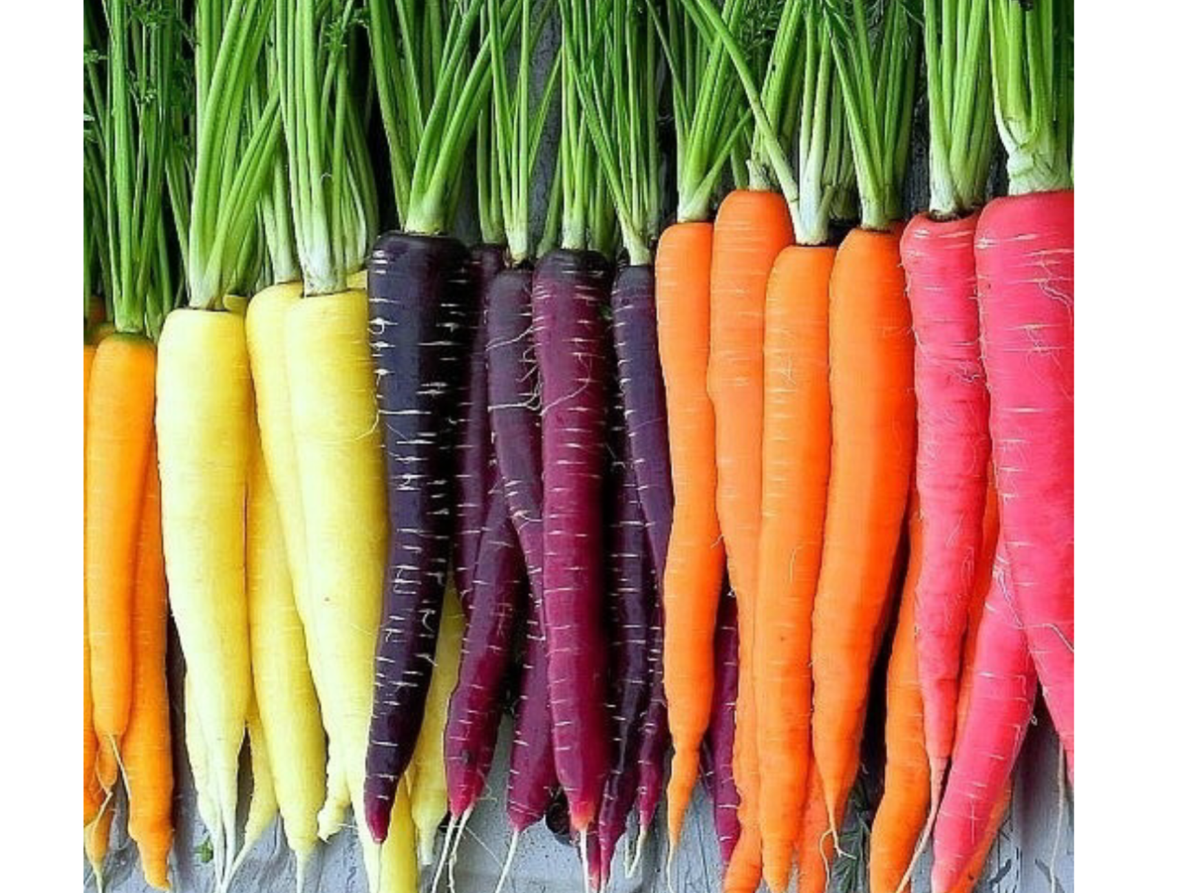Herb Roasted Rainbow Carrots